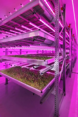 Stockbridge Technology Centre's Vertical Farming Development Facility (Photo: Business Wire)