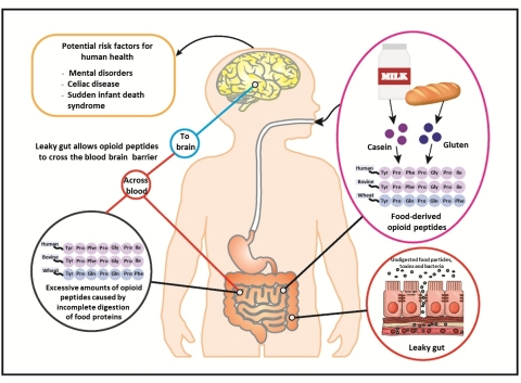 Fig 1. Food-derived opioid peptides are potential risk factors for human health (Graphic: Business W ...