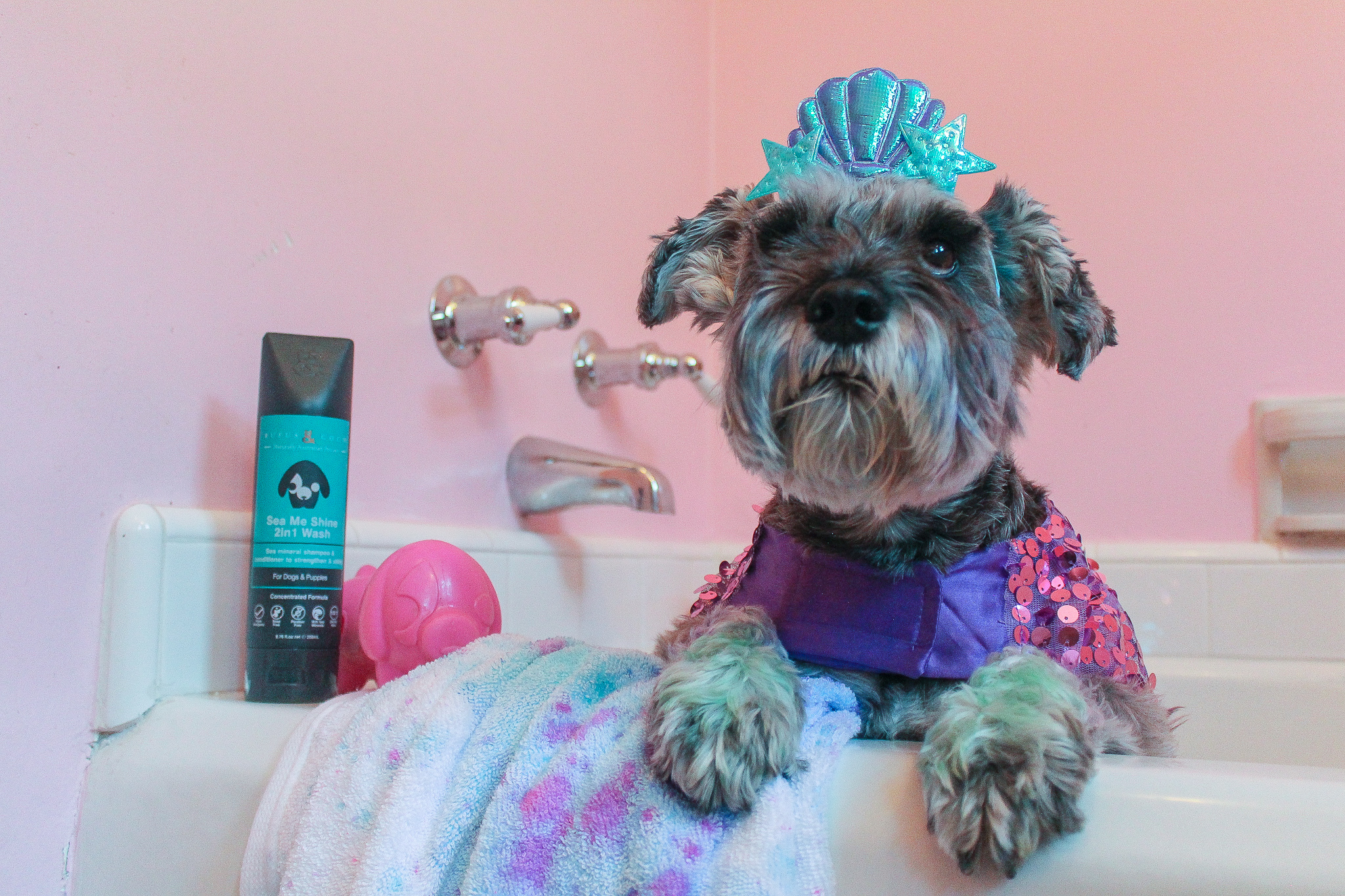 this halloween, don't let a cute pet costume trick you into harming