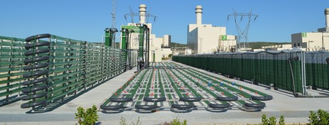 AlgaEnergy's microalgae production facility in Cádiz, Spain (Photo: Business Wire)