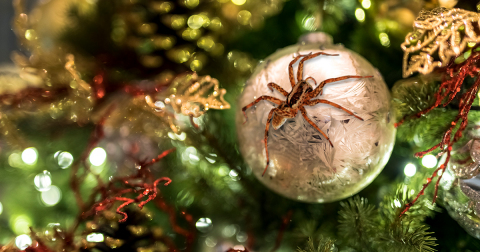 NPMA shares ways to deck the halls without inviting pests (Photo: Business Wire)