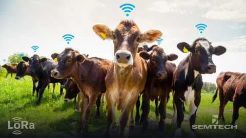 Semtech and lar.tech Enable Smart Ranching with LoRa Technology (Photo: Business Wire)