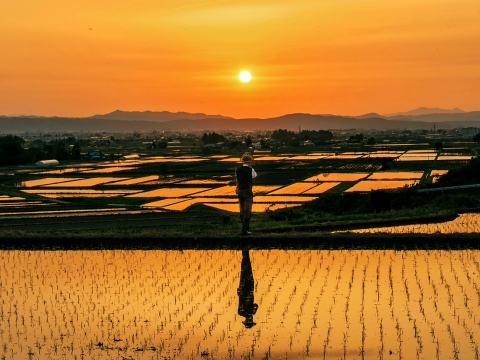 "The Grand Prize ""Hope for good harvest"" Photographer: Cheng Tongjun (From China), Location: Aizuwakamatsu, Fukushima Prefecture, Japan (Photo: Business Wire)"