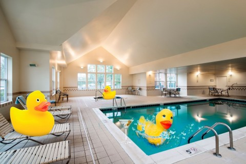 Just ask Ernie: Rubber duckies make pool time lots of fun. (Photo: Business Wire)