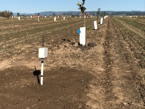 Internet of things sensors at a hazelnut orchard in Oregon monitor moisture and reduce water use. (Credit: Intel Corporation)