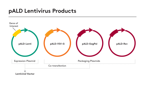 New Standardized Plasmids Available for Lentiviral