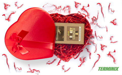 """Bitten by the """"Love Bug"""" this Valentine's Day? Call Terminix to help you send chocolate-covered inse ..."""