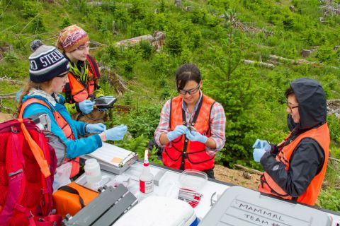 Temporary Field Technician Noelle Tom-Wigfield and her team work at the Abby Road terrestrial site in the Pacific Northwest. Photo credit: Ben Carroll