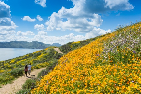2017's wildflower super bloom at Diamond Valley Lake (Photo: Business Wire)