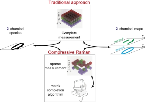 Caption: With the new compressive Raman approach, the researchers could acquire less spectral data than traditionally required and then use the matrix completion algorithm to fill in information not recorded. Credit: Hilton De Aguiar, École Normale Supérieure