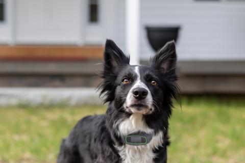With the SpotOn Virtual Smart Fence, the world is your backyard. It's the first and only mobile dog containment and tracking system that allows dog owners to take their dogs wherever they go. (Photo: Business Wire)