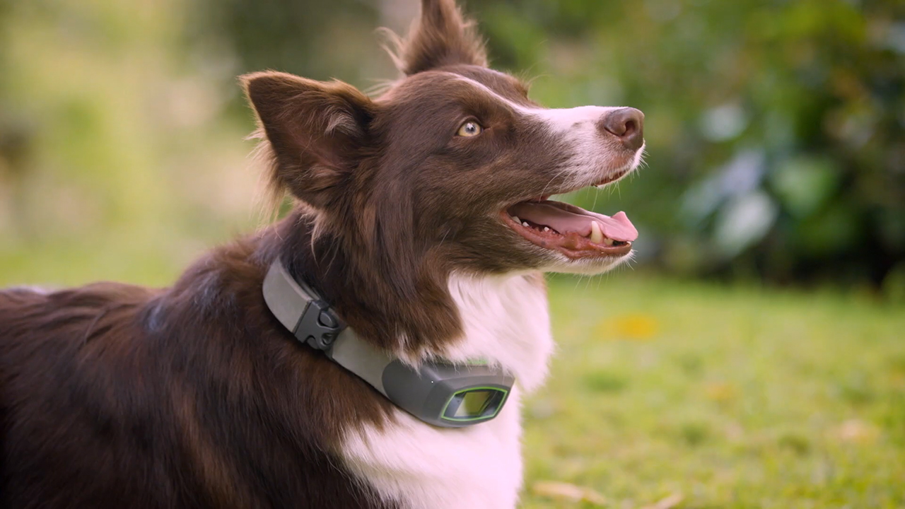 The SpotOn Virtual Smart Fence is a new way to keep your dog safe outdoors, with lots of room to roam.