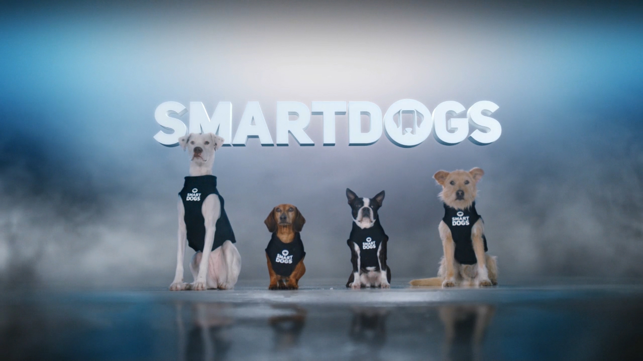 Can Smartdogs help stop distracted driving? Watch to find out!
