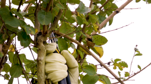 Anvil-style hand pruners are a good choice for pruning small branches, but they crush delicate stems more than bypass-style pruners. (Photo: Business Wire)
