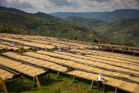 Via the Global Farmer Fund, Starbucks provides loans to coffee farmers to strengthen their farms through coffee tree renovation and infrastructure improvements. (Photo: Business Wire)
