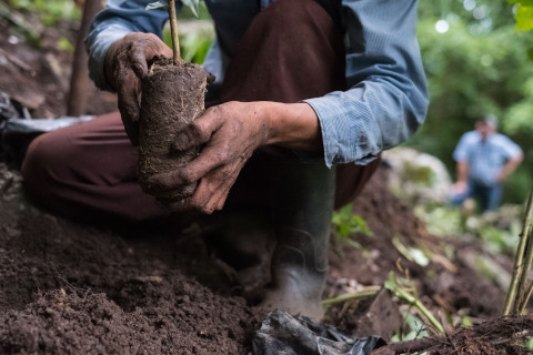 Funds from the bond will support Starbucks ongoing work around ethically sourced coffee, including its work around agronomy research and development and the donation of coffee trees to farmers. (Photo: Business Wire)