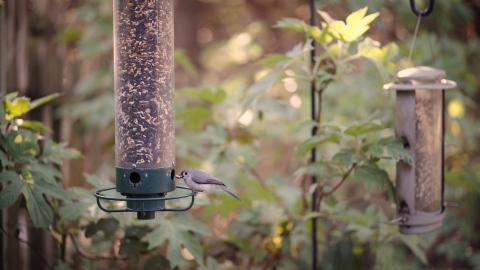 Bird feeders are an easy way to increase bird traffic in your yard. (Photo: Exmark)