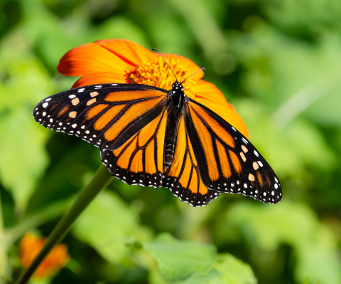 Use nectar-rich flowers and plants to attract butterflies to your yard, and support their full life cycle by planting host plants for eggs and caterpillar habitat. (Photo: Exmark)