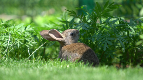 When the goal is to increase wildlife activity in your yard, it makes sense to reduce pesticide use. (Photo: Exmark)
