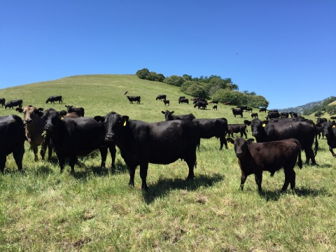 Panorama Meats supports U.S. family ranchers who raise organic, grass-fed beef to support the growing market demand. (Photo: Business Wire)