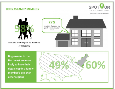 Nationwide survey, sponsored by SpotOn Virtual Smart Fence, found that 72 percent of dog owners have their dogs sleep in a family member's bed or room (Graphic: Business Wire)