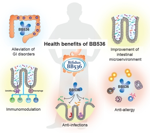 Figure 1. Beneficial effects of Bifidobacterium longum BB536 on human health. (Graphic: Business Wire)