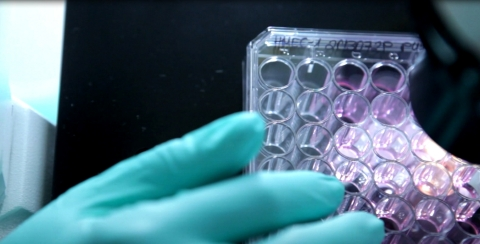 SIRION Biotech's LentiBoost™ Inside shown here (Photo: Business Wire)