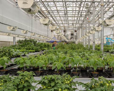 Terramera's fully automated Research Greenhouse with custom high-throughput phenotype imaging system (Photo: Business Wire)