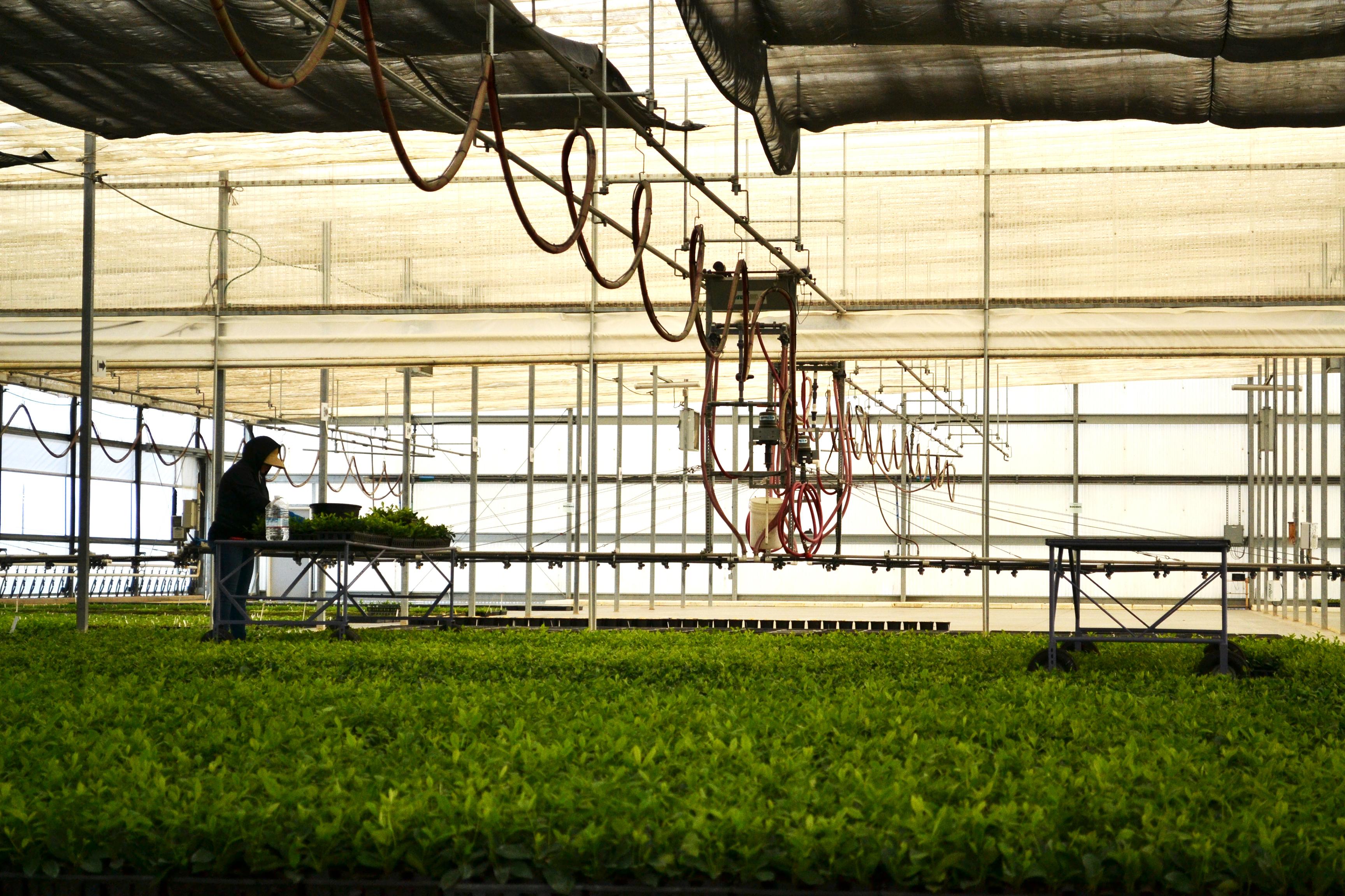 Treetown Usa To Showcase Plants