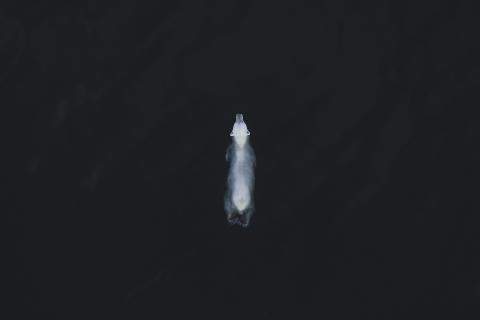 Polar Bear in Svalbard, Norway June 2019 (Fernando O'Farrill, Mexico)