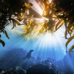 The Nature Conservancy anuncia los ganadores del concurso de fotografía 2019