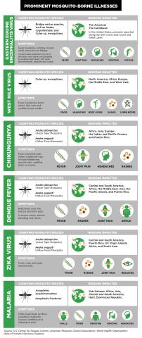 Prominent Mosquito-Borne Illnesses (Graphic: Business Wire)