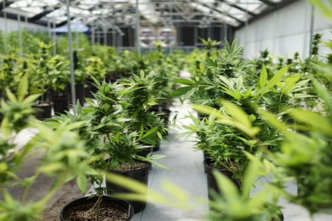 Goldenseed Files with SEC to Hold Stock Offering  (Photo: Business Wire)