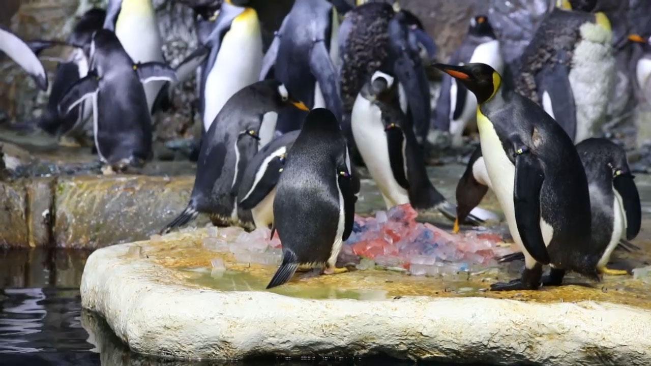 Penguins at Moody Gardens Aquarium Pyramid in Texas, Predict the World Series Winner