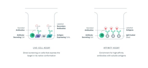 Examples of AbCellera's proprietary single-cell assays (Graphic: Business Wire)