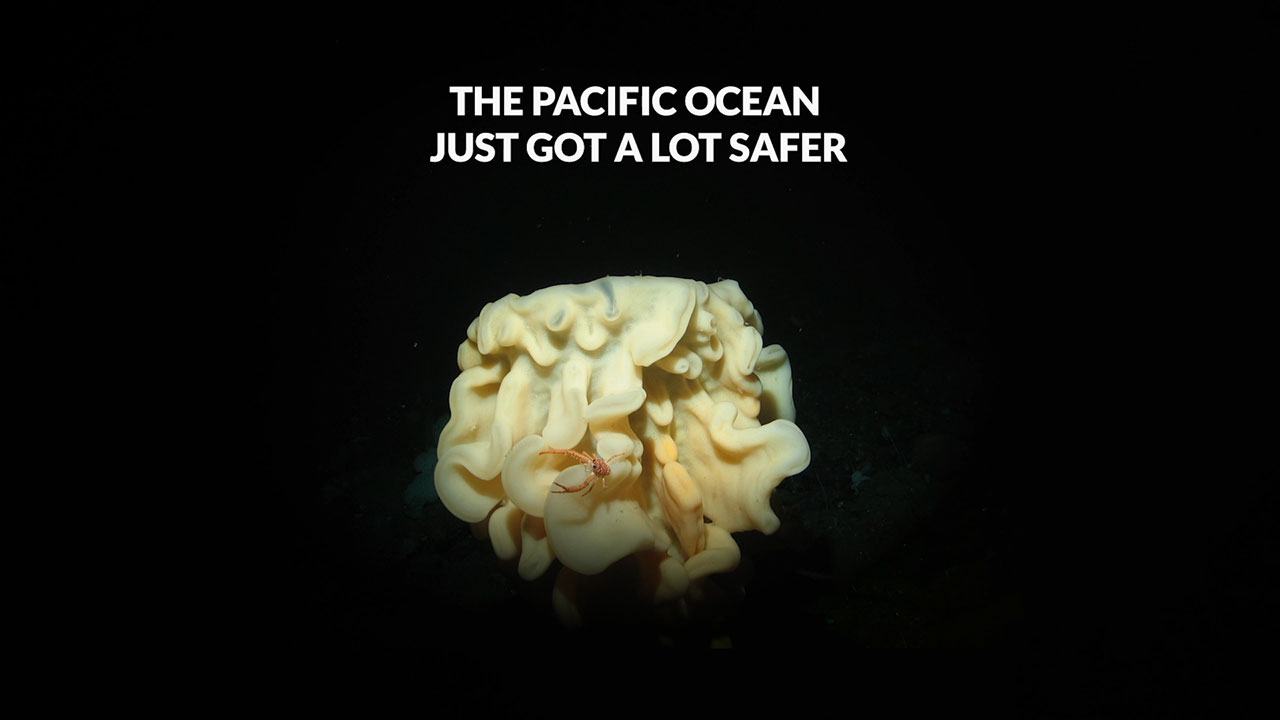 Oceana Wins Protections for Pacific Seafloor