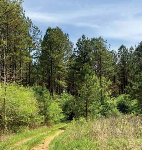 Molpus Announces the Purchase of 18,433 Acres in East Central Alabama (Photo: Business Wire)