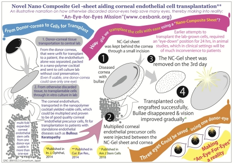 Corneal endothelial cell transplantation for Bullous Keratopathy from lab to clinical translation using polymer cocktails and nano-composite gel sheet (Graphic: Business Wire)