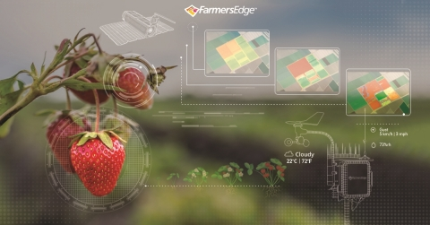 Farmers Edge daily satellite imagery combines imagery-derived map layers and automatic crop health change detection, allowing growers to accurately identify, predict, and respond to issues before yield is impacted. (Photo: Business Wire)