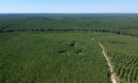 Molpus Woodlands Group Purchases 86,605 Acres in East Texas (Photo: Business Wire)