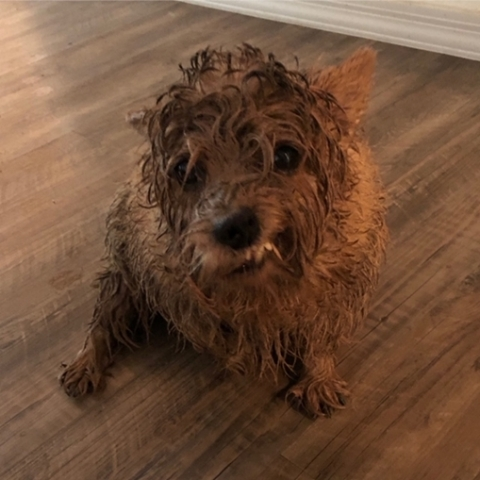 """Darwin's customer Patricia says her dog plans on following this resolution, with a twist. Her pup plans on: """"More playing in the rain, less mud in my mouth."""" (Photo: Business Wire)"""