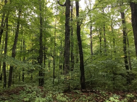Molpus Woodlands Group Purchases 14,306 Acres in the Upper Peninsula of Michigan (Photo: Business Wire)