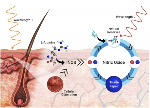 Light Induced Nitric Oxide (Photo: Business Wire)