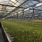 Fluence Expands EMEA Footprint with Horticulture Partners in Papenburg, Germany
