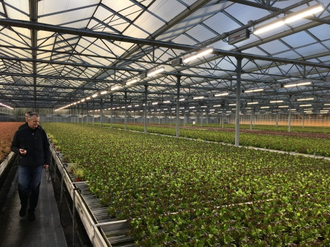 Friedrich Schulz's 5.5 hectare farm—which grows herbs year-round in addition to lettuce, peppers and chives—utilizing VYPR 2p fixtures. (Photo: Business Wire)