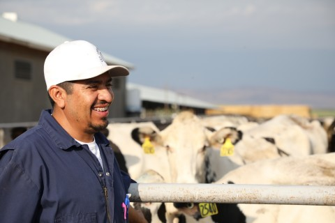Manuel Álvarez is the herd manager at DeGroot Dairy in Melba, Idaho — a 3,200-cow operation and one of our member owners. (Photo: Business Wire)