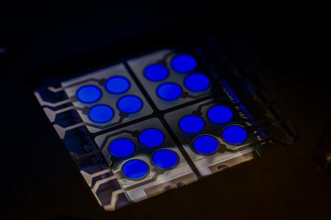 OLED元件中的CYNORA螢光藍色發射器cyBlueBooster(照片:cynora GmbH的Harald Flügge博士)
