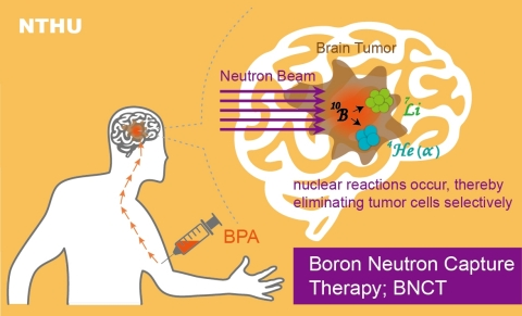 The BNCT treatment mechanism. Since being converted for use in BNCT, the research reactor at NTHU has been used to treat over 130 patients. (Graphic: National Tsing Hua University)