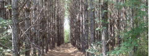Molpus Woodlands Group Purchases 66,946 Acres in Southeast Mississippi (Photo: Business Wire)