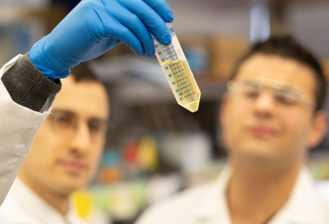 Feinstein Institutes scientists look at a test tube. (Credit: Northwell Health)